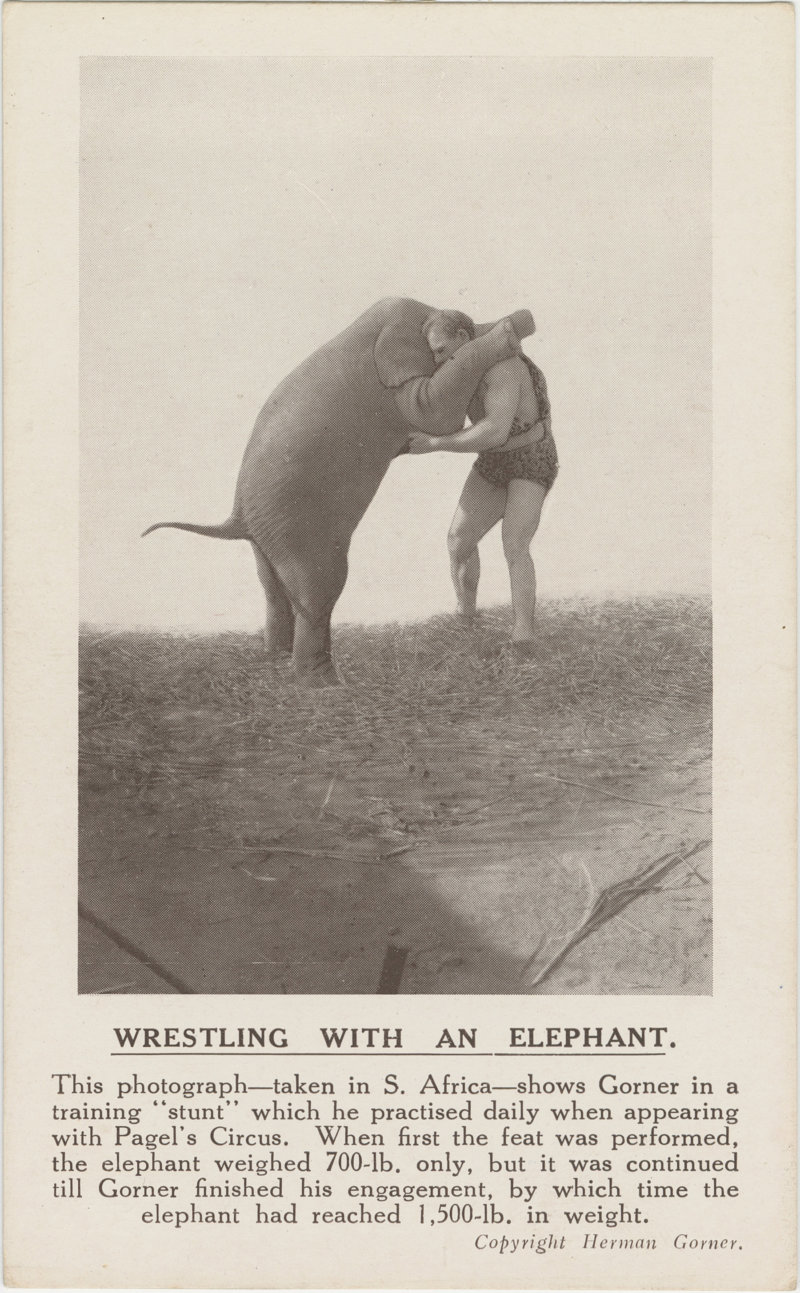 Wrestling With Elephants
